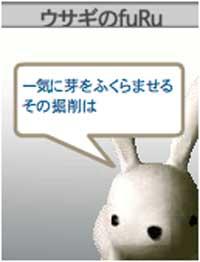 060331-usagi-05.jpg