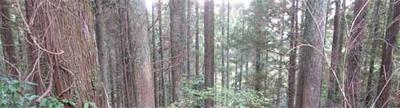 森林をいかす家づくり-1