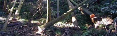 森林をいかす家づくり-2