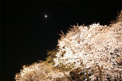 070329-yozakura-02.jpg