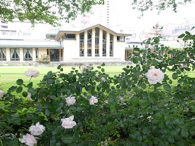 110526-mejiro-rose.jpg