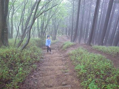 伊豆ヶ岳にて—植林された森
