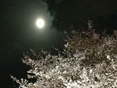 120405-yozakura.jpg
