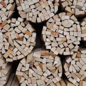 木になる木口